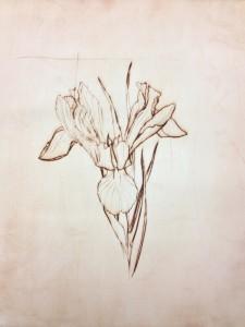 HC-Iris kopie